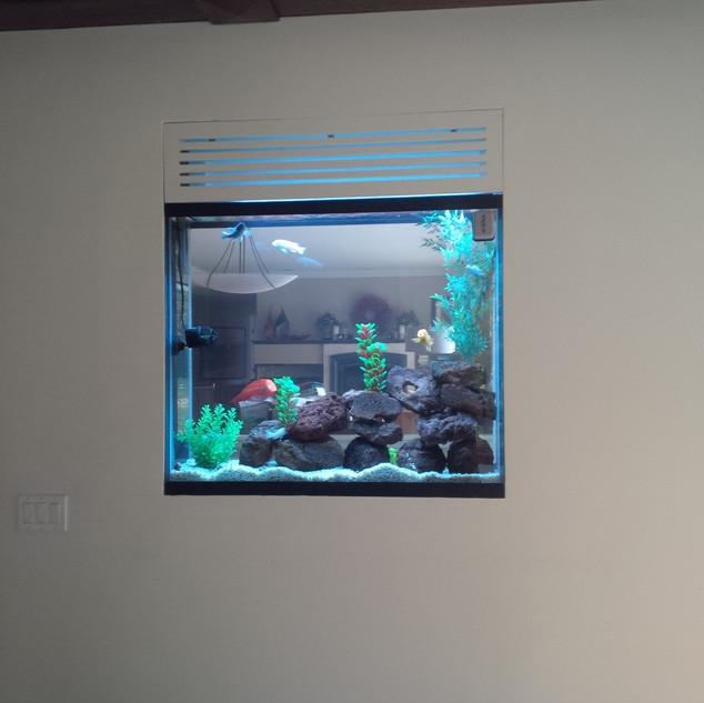 Two Sided Aquarium Scarborough