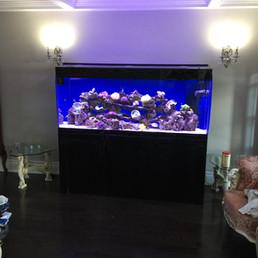 Custom Saltwater Aquarium Toronto