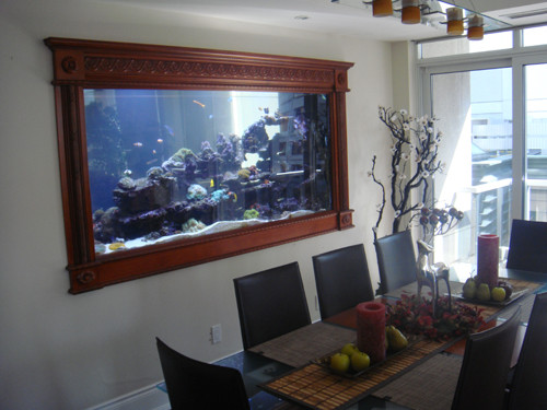 Toronto Fish Tank Cleaning