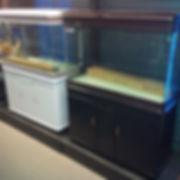 Cheap fish tanks scarborough