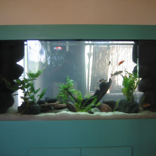 Two Sided Custom Aquarium