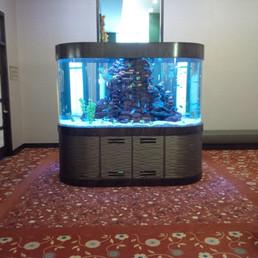 Race Track Curved Acrylic Aquarium