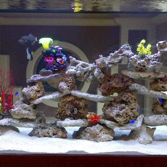 Reef Tank with Live Rock
