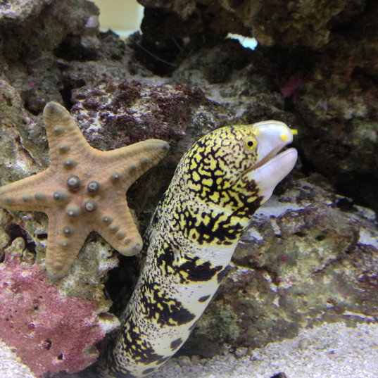 Snowflake Eel and Starfish