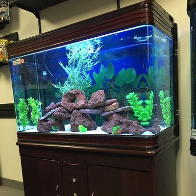leasing an aquarium