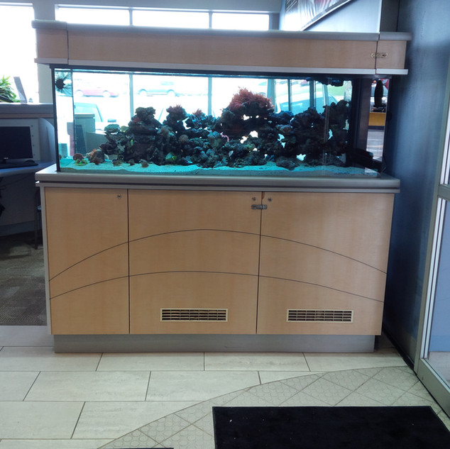 Saltwater Aquarium Toronto