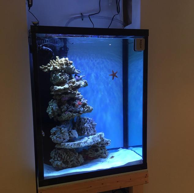 Custom Aquariums Toronto