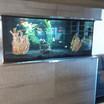 Koi Aquarium Toronto