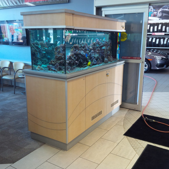 Aquarium Services GTA