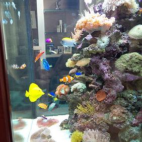Toronto Aquarium Service