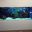 Large African Cichlid Fish Tank