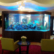 Custom Aquariums Toronto