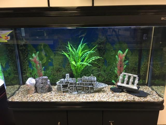 Aquarium Lease Program Toronto