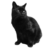 Jasper the cat_NirakFilms.png