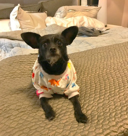 Pet Sitting San Antonio_Metro Pup SA