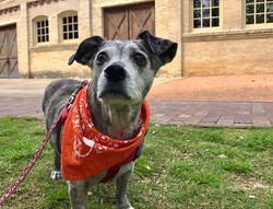 Metro Pup SA Dog Walking