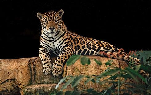 jaguar-2800382_960_720.jpg