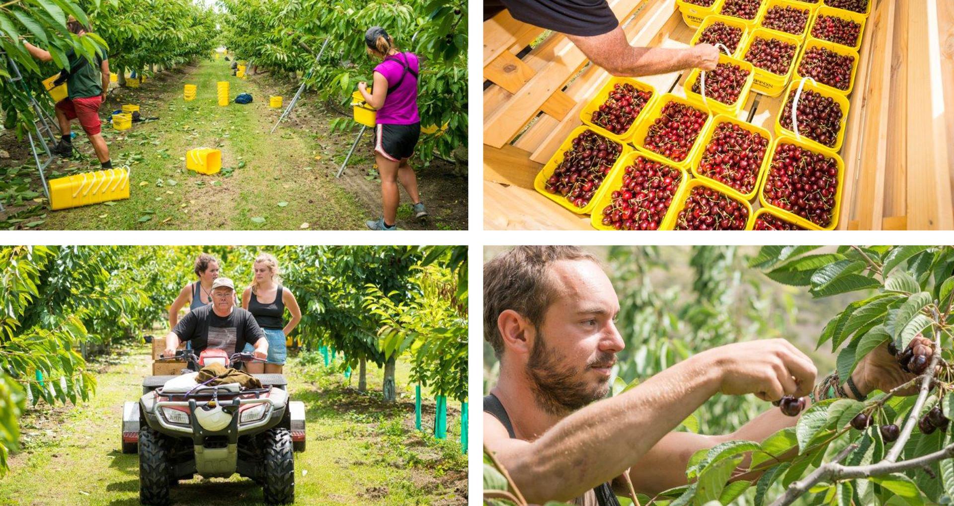 rippovale–winery–new-zealand-bg-image-16