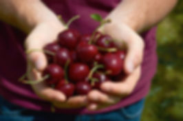 Jakimm Orchard Cherries