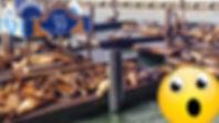 Pier39-MINI.jpg