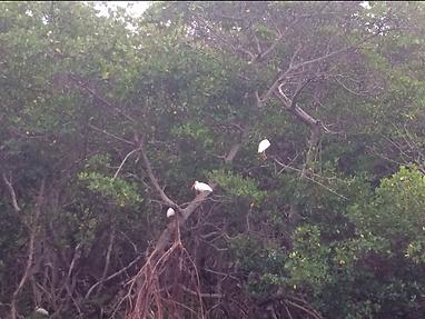 birding, Florida