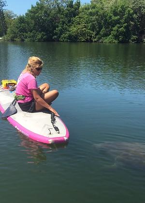 manatee, Boca Grande, paddleboard tour, kayak, adaptive paddle