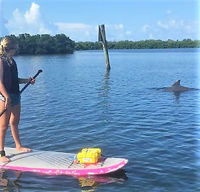 dolphin, Don Pedro Island State Park, adaptive, special needs, paddle