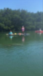 manatee, Boca Grande, paddleboard, kayak, tours