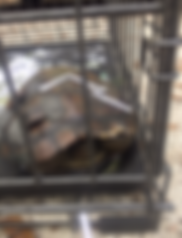 turtle, wildlife rescue rehabilitation