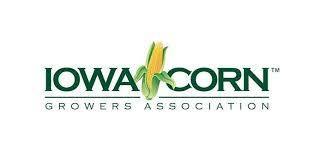 Iowa Corn.jpg
