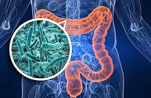 microbiota-intestinal-image.jpeg