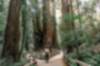 path forest fork 2MB.jpg