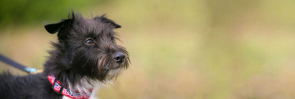 yuki-dog-547816-unsplash_PS-Web.jpg