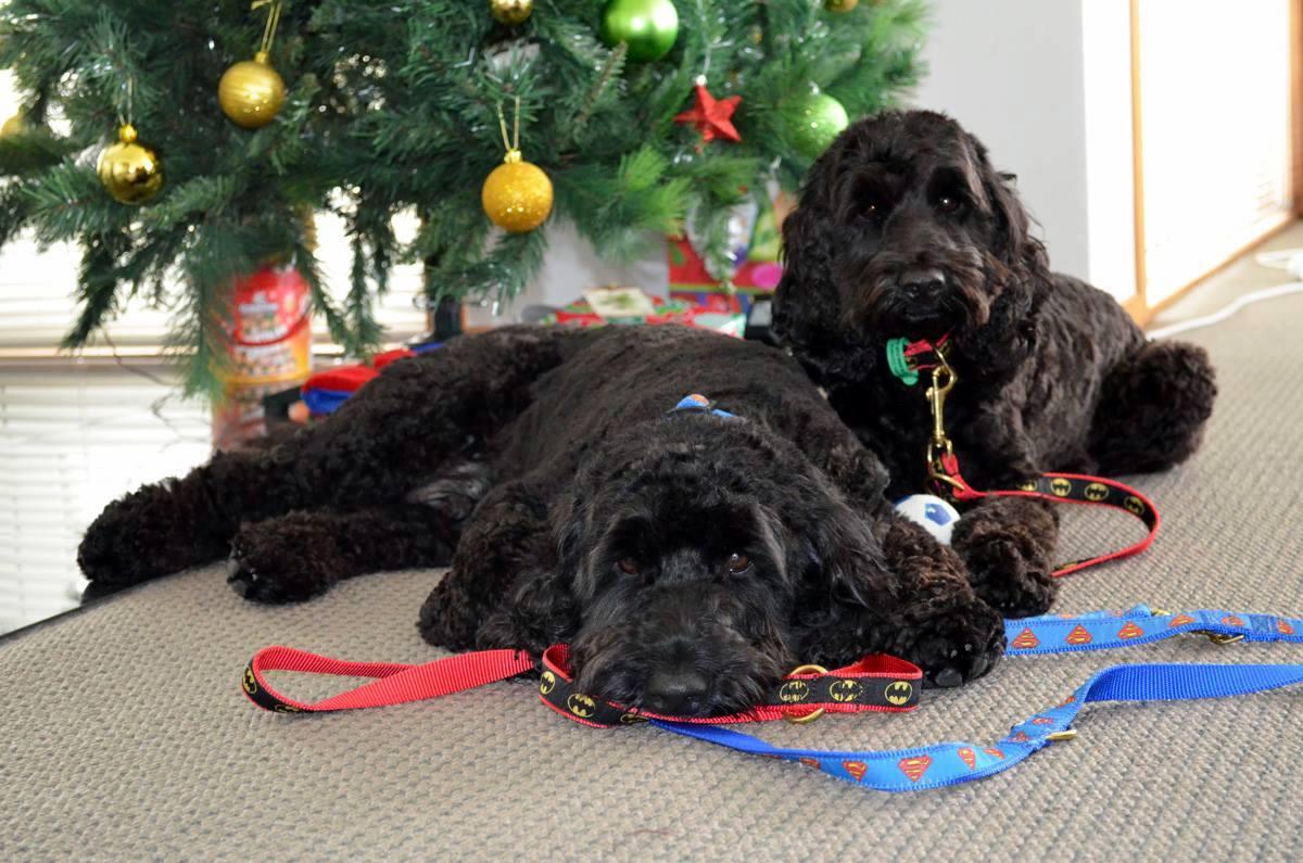 Jackson and Ollie