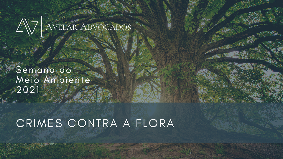 Avelar Advogados - Semana do Meio Ambiente 2021 - Crimes Contra a Flora