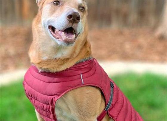 Alpine Puffer Dog Coat in Burgundy
