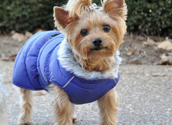 Alpine Puffer Dog Coat in Blue