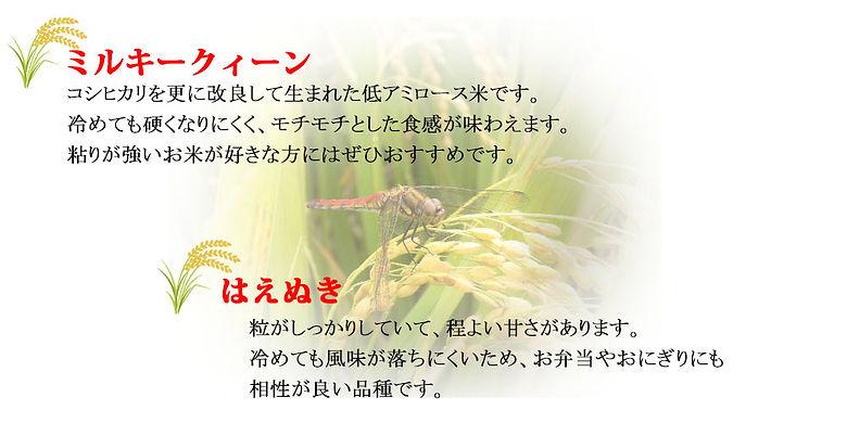 ミルキー・はえぬき.jpg