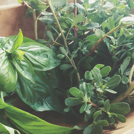 harvest vibes __ bolted basil and wild p