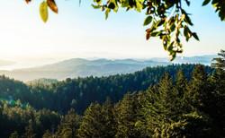Mt. Tamalpais State Park, CA