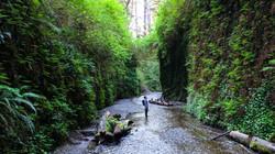 Fern Canyon, Redwood National Park