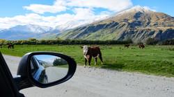 Mount Aspiring, NZ