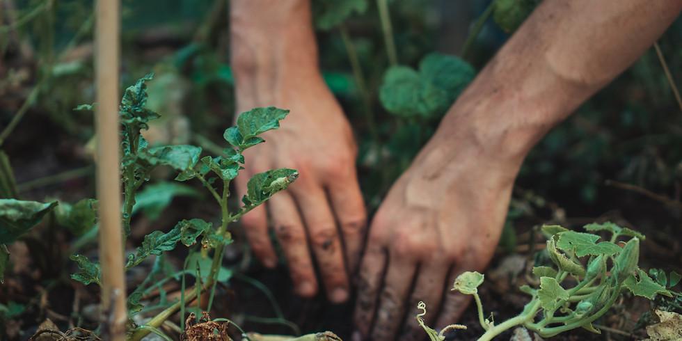 Atelier - Plantation Rosiers : Differdange