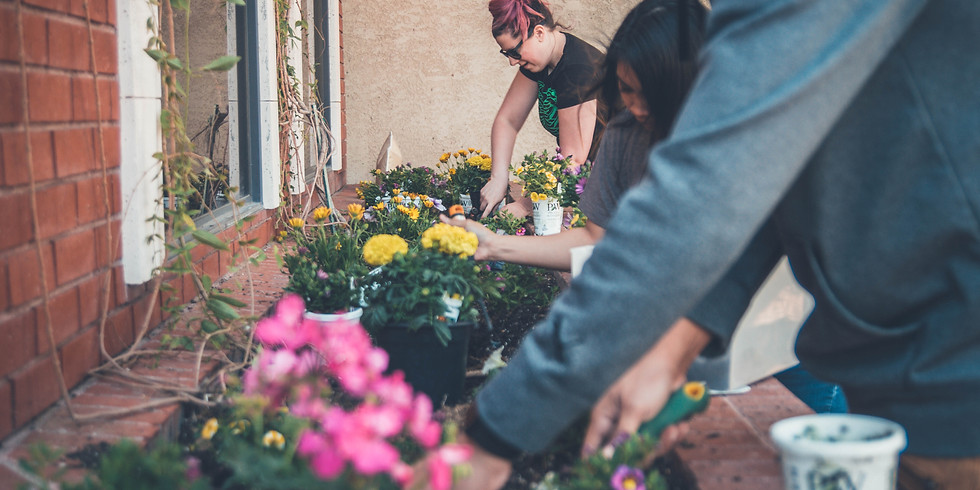 Atelier - Plantation Rosiers : Saulnes