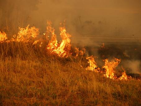 Development on Bush Fire Prone Land - NSW Planning Requirements
