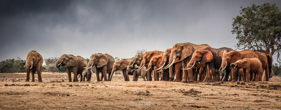 Tsavo East National Park - Kenya