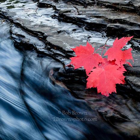 Fallen Leaves - Bob Brown