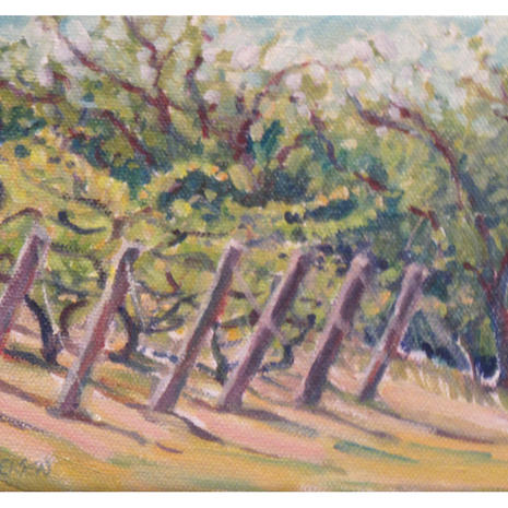 8.Vineyard and Orchard, Old Mission Peninsula