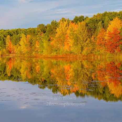 Autumn Glory - Bob Brown
