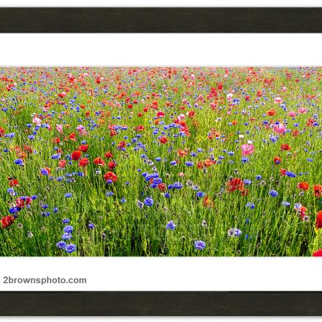Poppies and Cornflowers - Kris Brown